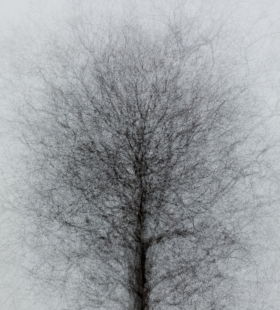 Tree Of Uncertainty